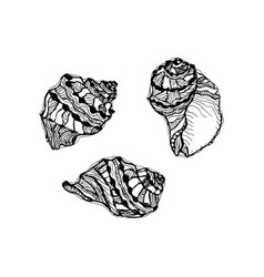 Seashell set hand drawn of sketch sea shell vector
