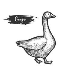 sketch goose bird profile farm geese vector image
