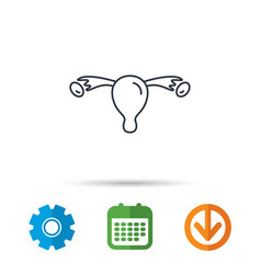 uterus icon ovary sign vector image