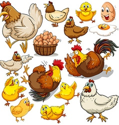 Chicken and fresh eggs vector image vector image