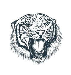 Tiger portraithand drawn style vector image vector image