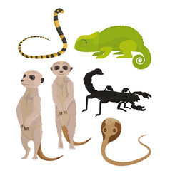animals of african desert vector image