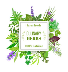 popular culinary herbs big set with squire emblem vector image