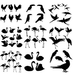 set various bird silhouettes isolated on white vector image