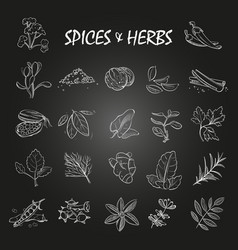 sketch spices and herbs collection on chalkboard vector image