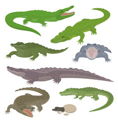 Green crocodile and alligator reptile wild animals vector