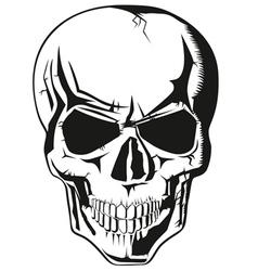 human skull new vector image