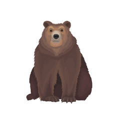 Brown bear wild northern forest animal vector