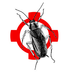 Hand drawn cockroach on crosshatch vector