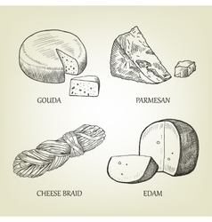 Sketch of different kinds of realistic cheese vector