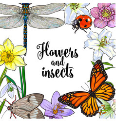 Square frame insects and flowers with place vector