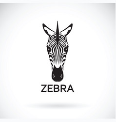 zebra face on white background wild animals vector image