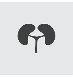 Kidney icon vector image vector image