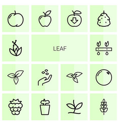 14 leaf icons vector image