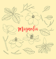 contours of flowers and leaf magnolia set floral vector image