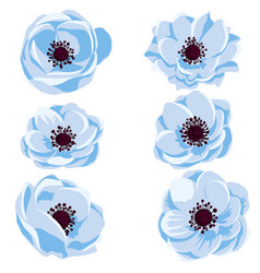 Drawing anemone flowers vector