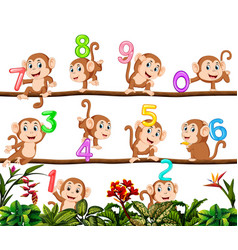 Lets count with monkey vector