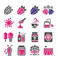 Raspberry and blackberry icon set vector