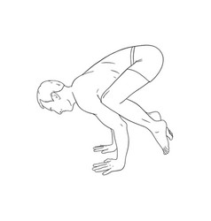 Yogi man in crow pose or bakasana yoga hand stand vector