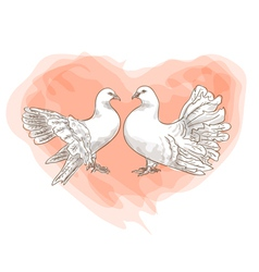 couple doves vector image vector image