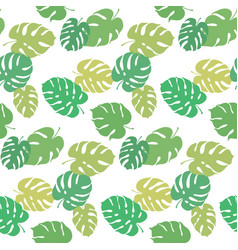 botanical of monstera leaf vector image