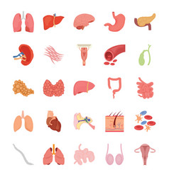 internal human organs flat icons vector image