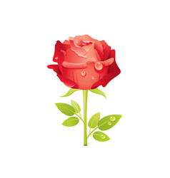 red rose flower floral icon realistic cartoon vector image