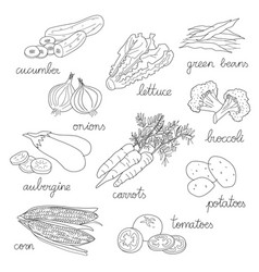 set of isolated hand drawn of vegetables in vector image