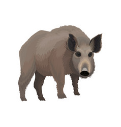 wild boar northern forest animal vector image