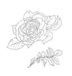 Set of detailed isolated outline rose bud vector