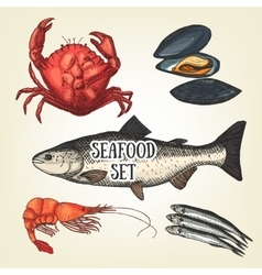 Creative seafood graphic sketch prawn vector image vector image