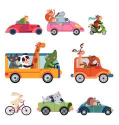 Animal transport fun cartoon car cute drivers vector
