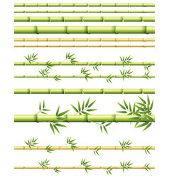different sizes of bamboo stems with and without vector image
