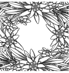 Graphic edelweiss flowers and leaves vector