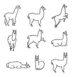 Hand drawn peru animal guanaco alpaca vicuna vector