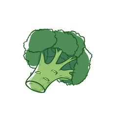 ripe broccoli sprouts isolated icon vector image