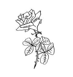 rose contour line barbed flower vector image