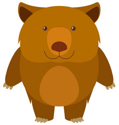 Wombat on white background vector