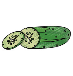 drawing cucumber food nutrition vector image