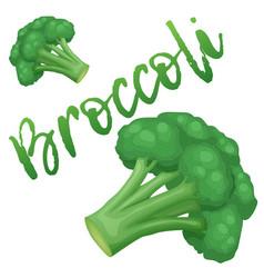 broccoli vegetable icon cartoon vector image