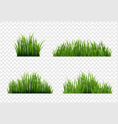 Grass border with transparent background vector