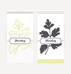 hand drawn parsley in outline and silhouette style vector image