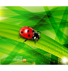 Ladybug on the background vector