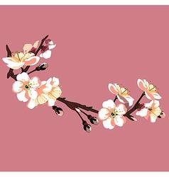 sakura flower on red background vector image vector image