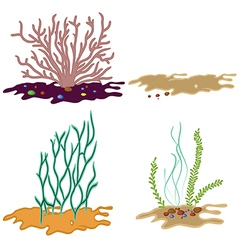 Algae seeweed set vector image