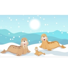 Walrus family vector image vector image