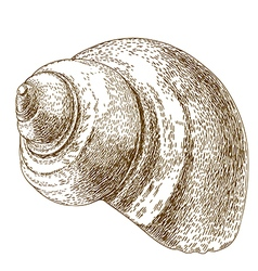 engraving snail shell vector image vector image