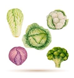 Set watercolor vegetables vector