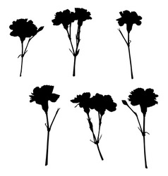 Silhouettes of carnations vector