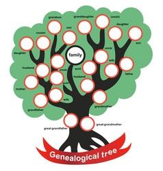 genealogical tree vector image